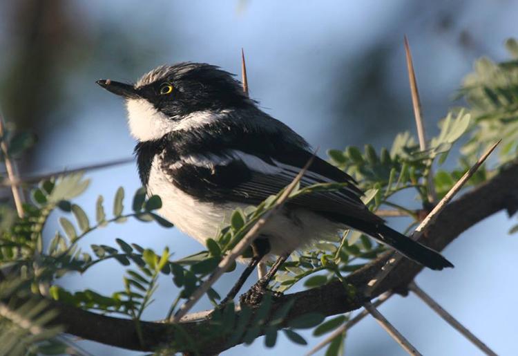 Birdwatching Wolseley