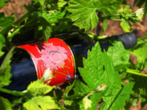 Wines of Wolseley Wine Route